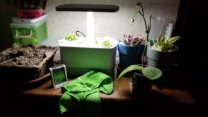 AeroGarden with seedlings on top of a dresser, with other plants around